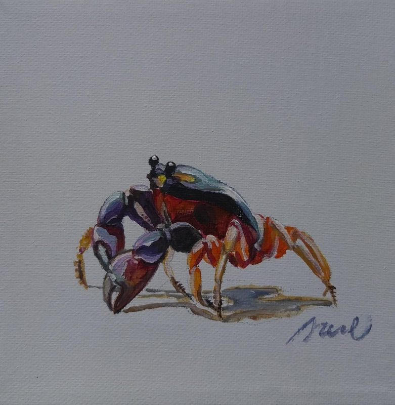 CRABE ROUGE